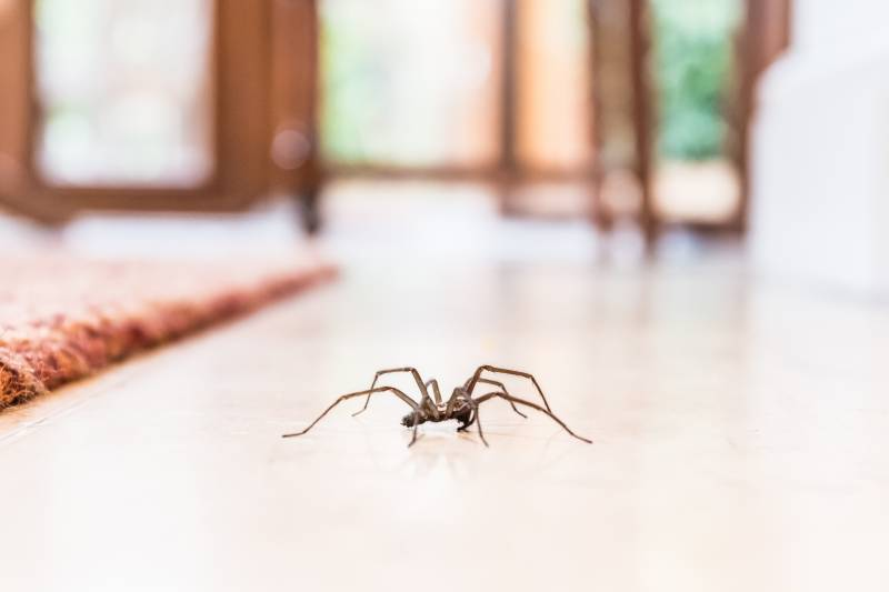 Stop Crawling Insects and Spiders
