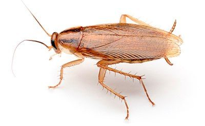 5 ways to prevent Cockroaches