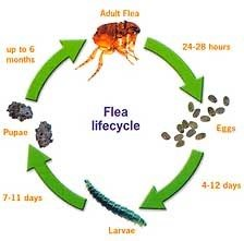 pest life cycles and tips
