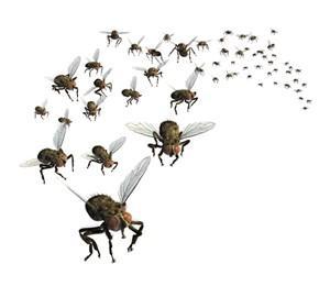 Pest Control in NZ