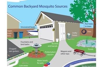 How to Keep Mosquitoes away from your Home