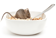 Keep Rodents Out of Your Home